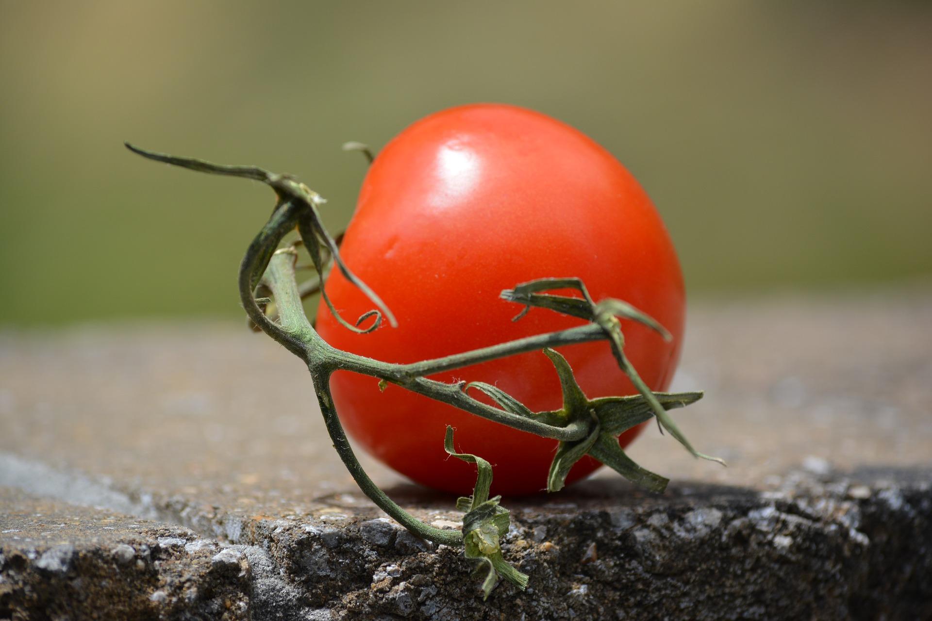 Pomidor o smaku czekolady?
